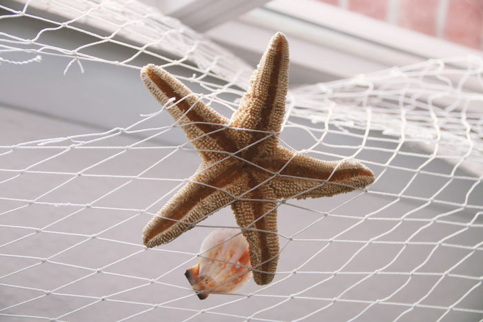 Animal Behavior Animal Markings Animal Themes Brown Close-up Complexity Day Extreme Close-up Fishing Net Focus On Foreground Fragility Intricacy Invertebrate No People Seagull Shell Spider Web Star Shape Starfish  Zoology