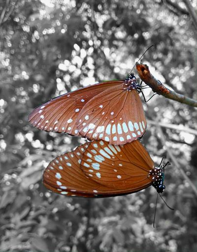 Butterflies!. Butterfly Butterfly Mating Patterns Monochrome Pattern Bokeh Insects Life Butterfly Love Butterfly Stories Butterfly Beauty