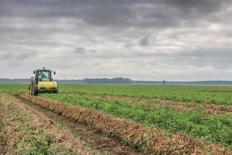 Agriculture Crop  Farm Farm Equipment Field Peanut Peanuts Rural Rural Scene