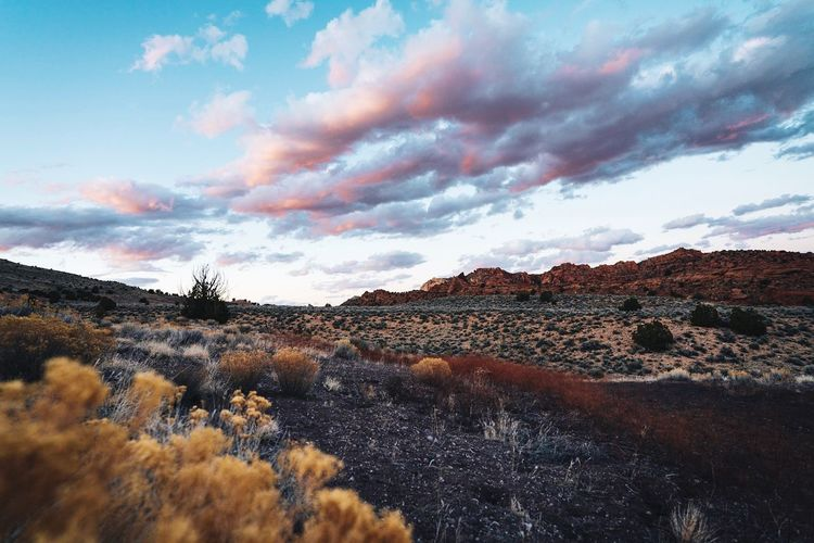 Desert Sunset Cloud - Sky Sky Plant Tree Nature Beauty In Nature No People Scenics - Nature Tranquility Tranquil Scene Mountain Environment Landscape Day Outdoors Non-urban Scene Land