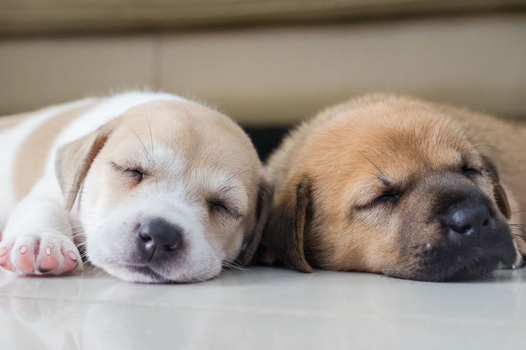Close-up of dogs sleeping on floor