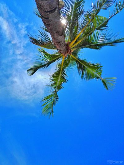 Coco Coconut Tree Palm Tree Branch Blue Leaf Summer Sky Close-up Cloud - Sky