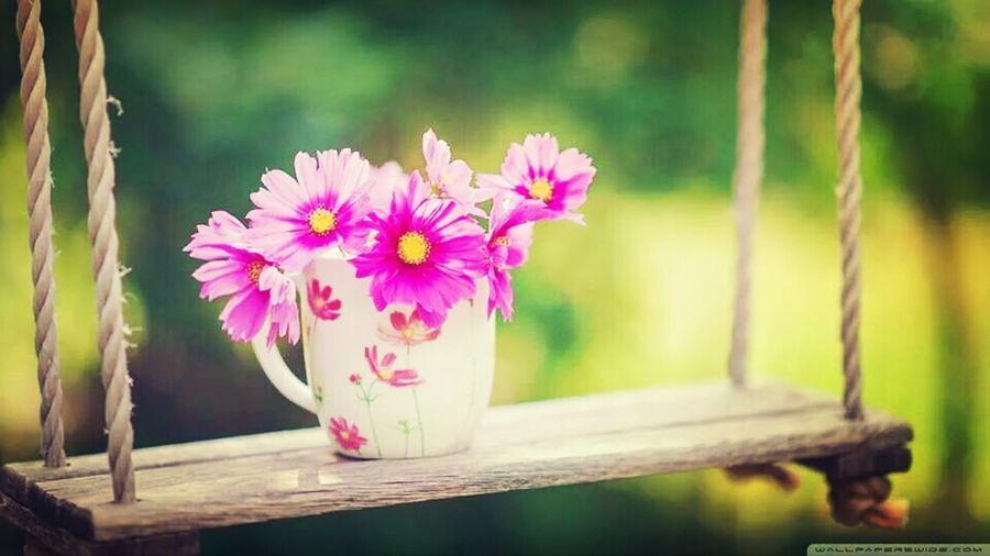 Caub Flower Goodmorning