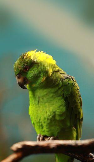 пупсик Parrot Animal Themes Animal Animal Wildlife One Animal Vertebrate Animals In The Wild