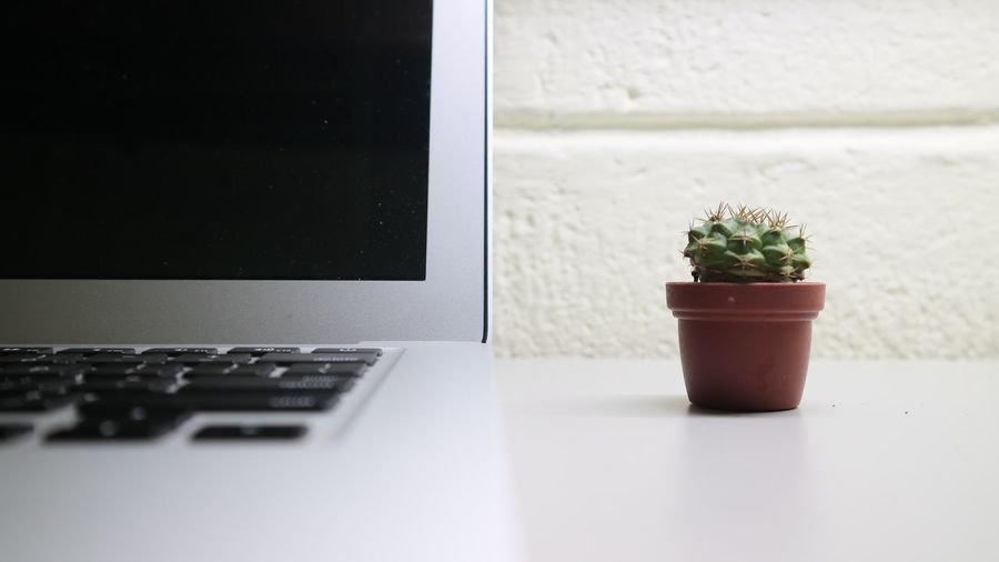 Close-up of potted plant and laptop on table