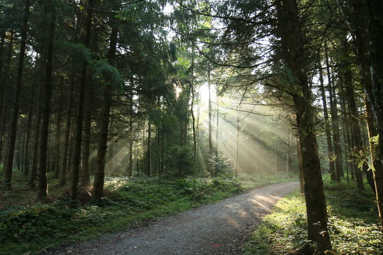 Sunlight Shining Through Trees In Forest Illuminating Footpath