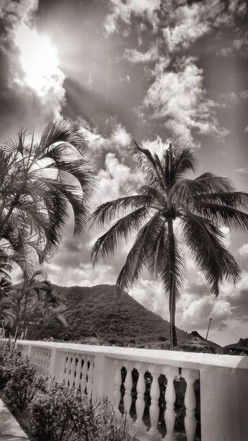 Cloud - Sky Sky Tree Palm Tree No People Day Architecture Outdoors Nature