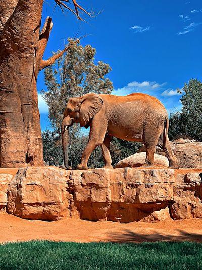 Elephant standing on rock against sky