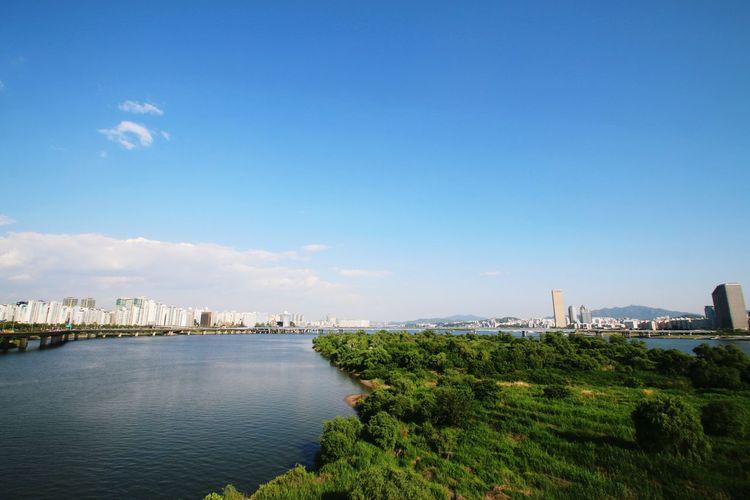 Green mangroves in han river against sky