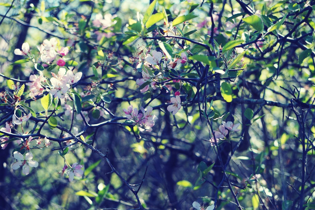 growth, tree, nature, flower, beauty in nature, branch, blossom, spring, no people, outdoors, freshness, springtime, day, fragility, foliage, close-up