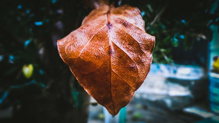 Close-up of dried leaf