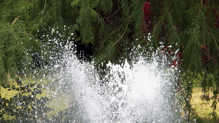 Water spraying White Water Water Spraying High Section Close Up Cold Tree Water Backgrounds Close-up