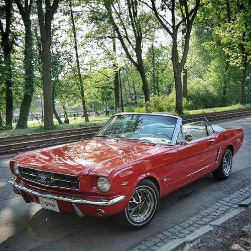 City Automotive Classiccars Fordmustang ford ponycar muscle 60s midcentury v8 mustang289 solacz citylife park nostalgia design american cars street renovation Poznań poznan