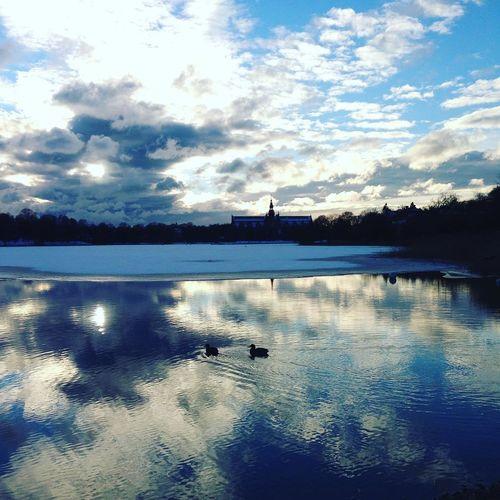 Vid Djurgården Djurgården Lake Nature No People Stockholm Sverige Water Winter