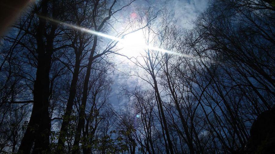 Beautiful Nature Sunshine EyeEm Nature Lover Escaping