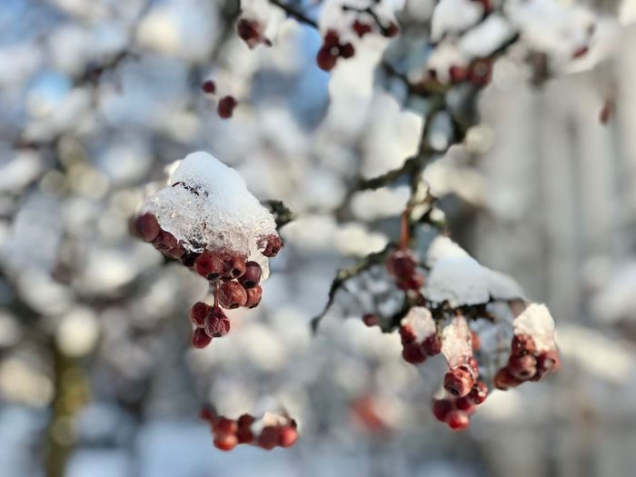 Winter beauty Winter Winter Wonderland Cold Days EyeEm Gallery EyeEm Best Shots Eye4photography  Focus On Foreground Plant Growth Tree Cold Temperature Winter Day Branch Close-up Beauty In Nature No People Freshness Frozen Flowering Plant Snow Fragility Vulnerability  Nature