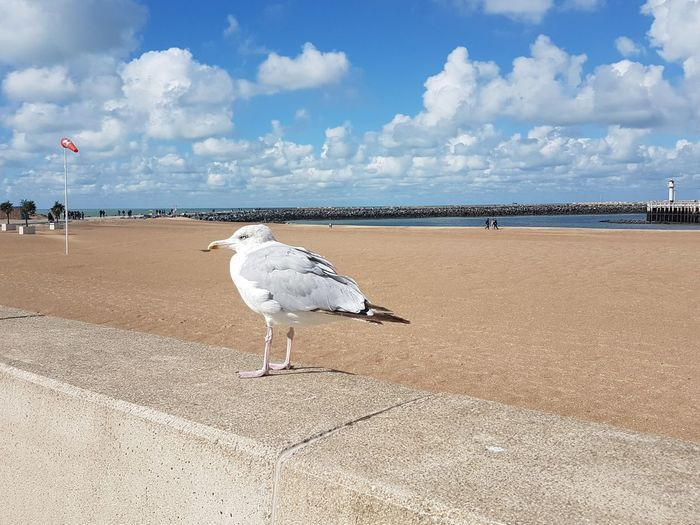 Beach Sand Sea Bird Animal Themes Outdoors Animals In The Wild Day One Animal Animal Wildlife Nature Sky Seagull Stork Cloud - Sky Beauty In Nature Tranquility Blue Travel Destinations Water No People Nature
