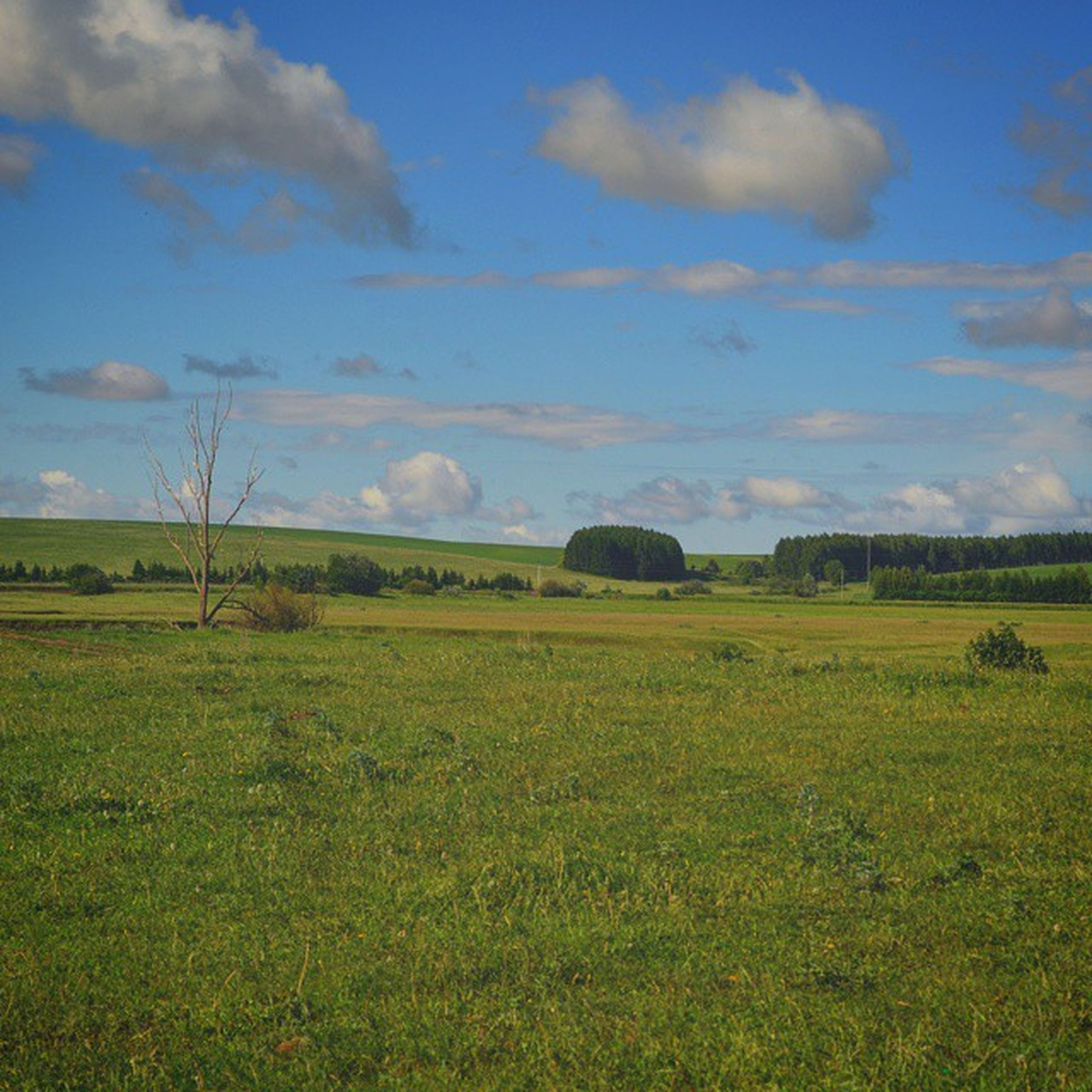 landscape, field, grass, sky, tranquil scene, tranquility, scenics, grassy, rural scene, beauty in nature, cloud - sky, nature, green color, cloud, growth, agriculture, horizon over land, non-urban scene, cloudy, farm