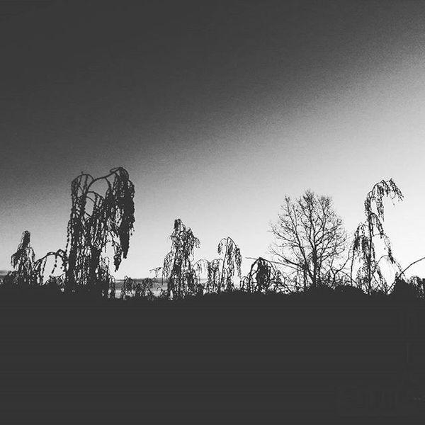 Dag 349 - Somberscape Dagensbild Picoftheday Somber Bw Bwlandscape Blackandwhite Inmybackyard