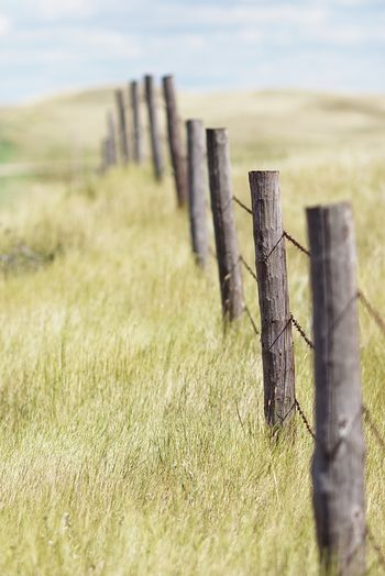 Wooden post fence on grassy field