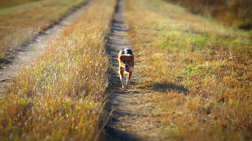 Adventure Buddies Showcase: January Nature Natural Beauty No People Summer Dogs Country Life I Love My Dog Outdoors English Shepherds Kansas Dogs