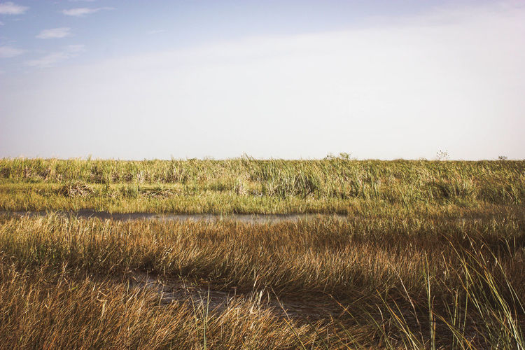 Grass growing on field against sky at everglades national park