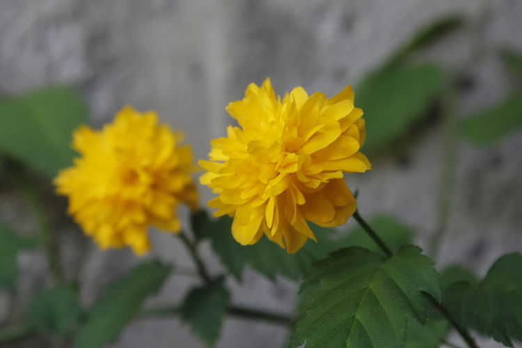 Two... Flower