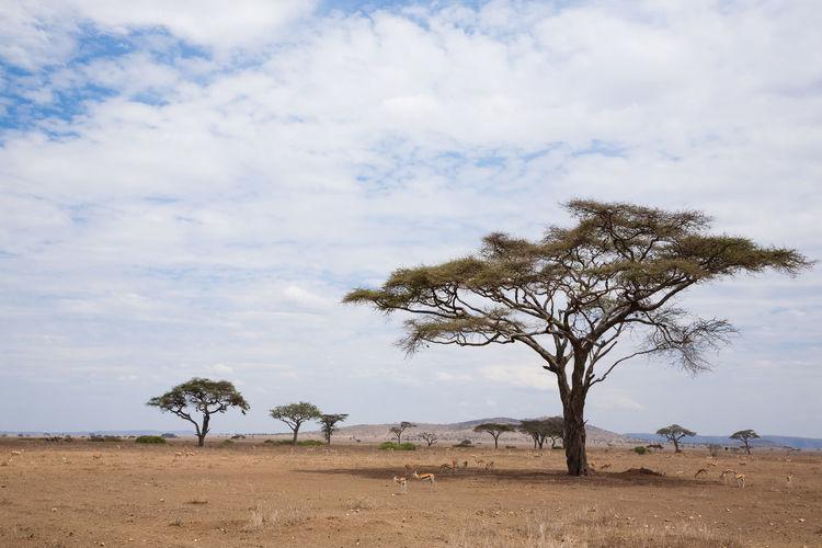 Trees on land against sky