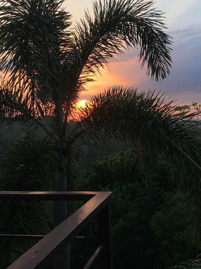Antipolo, Rizal Ph Balcony View Easter 2018 Easter Sunday Sundown Foxtail Palm Trees I Love Luzon The Philippines Serene Philippines