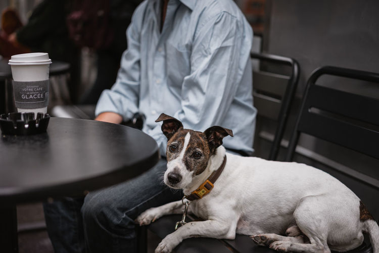 Portrait Of Dog Resting By Man Sitting At Cafe