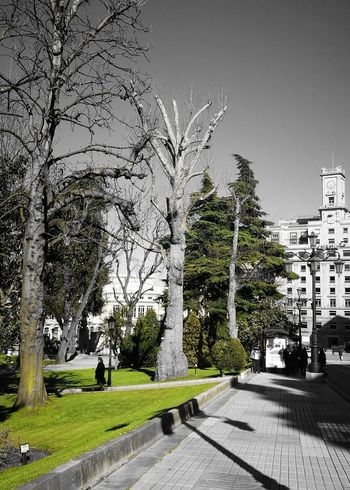 Tree Nature No People Growth Outdoors Day Grass Sky Beauty In Nature Dark Black And White Portrait Blackandwhitephotography Photos Blacknwhitecity Dark City Streets City View  Blackandwhite Photography Photoshopped Cutie Citylife Photoshop City Street Blackandwhite Blackandwhitephoto Light Effect Dismally
