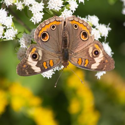Canon EOS 60D Animal Animal Themes Animal Wildlife One Animal Insect Animals In The Wild Butterfly - Insect
