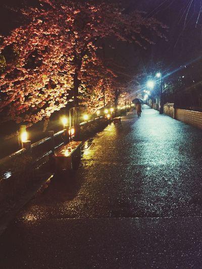 河津桜 春 Spring Rain 雨 Japan 日本 Hanami 花見 Flower 花 Riverside