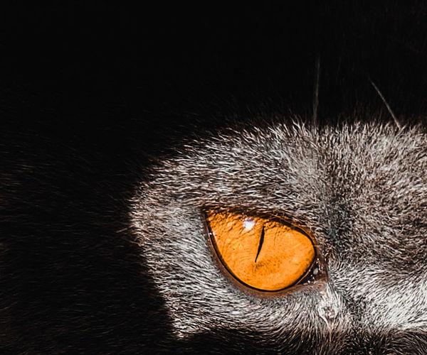 eye Cat Black