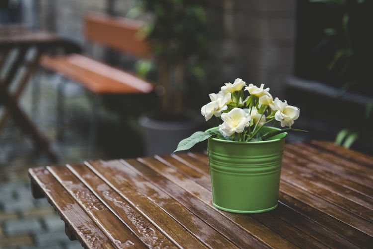 Small green flowerpot with yellow flowers on a wooden table wet by the rain on the street. Close-up Day Decoration Flower Flower Arrangement Flower Pot Flowering Plant Focus On Foreground Freshness Green Color Leaf Nature No People Outdoors Plant Plant Part Potted Plant Seat Table Wood - Material