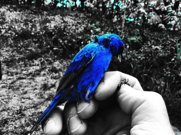 The Great Outdoors - 2016 EyeEm Awards Bird Bluebird Bluesplash Blackandwhite