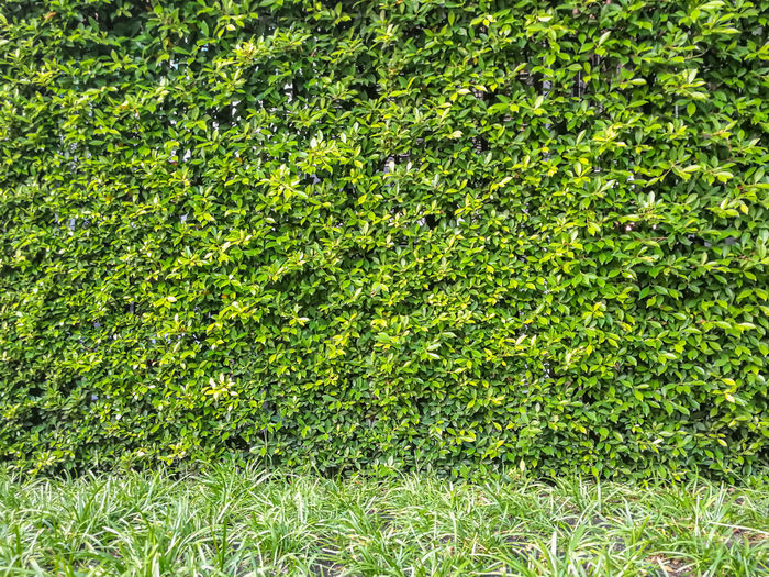 Backdrop Background Beauty In Nature Botanical Botany Close-up Day Environment Evergreen Freshness Full Frame Garden Grass Grass Green Color Growth Leafs Nature No People Outdoors Park Pattern Peace And Quiet Plant Tree