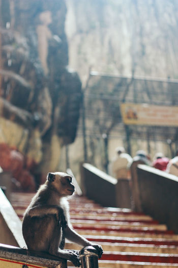 Infant monkey sitting on railing