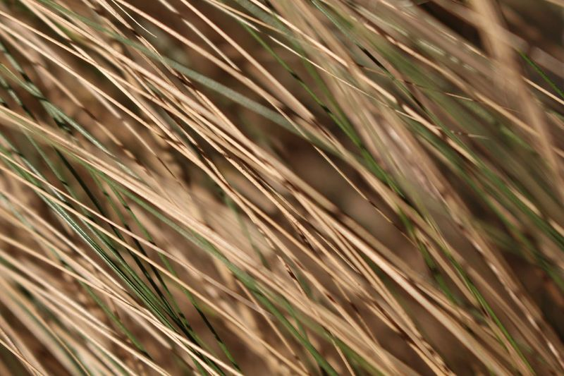 Backgrounds Plant Nature Close-up No People Growth Pattern Selective Focus Full Frame Grass Sunlight Day Leaf Land Field Plant Part