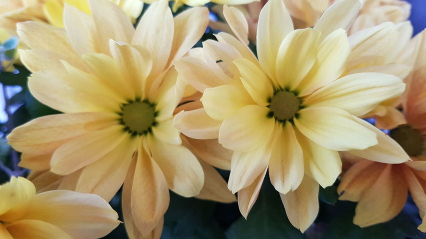 Flower Flower Head Petal Fragility Freshness Nature Beauty In Nature Plant Springtime Close-up Growth Outdoors Day No People Yellow