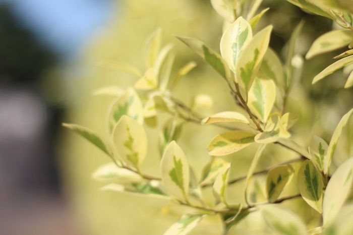 Fresh Morning. Leaves🌿 Beauty In Nature Bokeh Background Close-up Day Daylight Flower Flower Head Fragility Freshfeeling Freshness Growth Leaf Nature No People Outdoors Plant