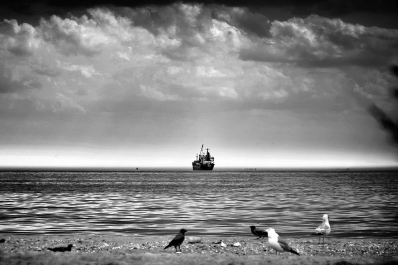 View of seagulls on sea