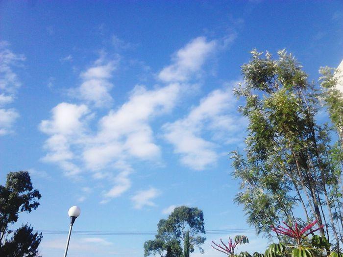 Cielo Sol Nubes Y Cielo Arboles , Naturaleza