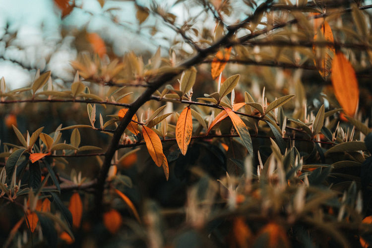 Close-up of autumnal leaves against trees