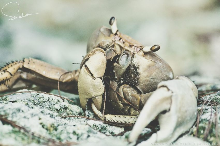 Don't be so crabby. NEXTshotPhotos Eye4photography  Macro Macro_collection