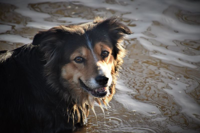 Close-up portrait of dog in water