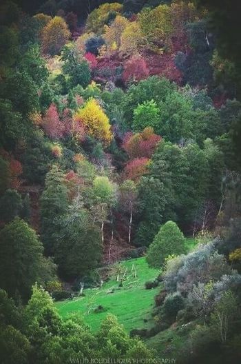Colored FOREST Tourism Algeria Skikda Collo Ouled Attia Forest Photography Colored Photography Green Color Nature Growth No People Day Outdoors Beauty In Nature Tree Freshness Plant Multi Colored