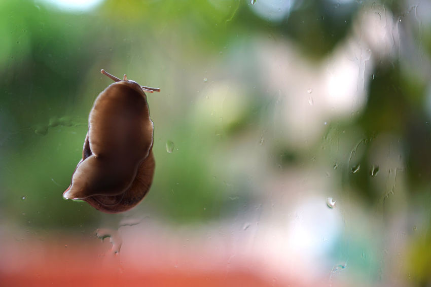 Snail crawling on a glass door Glass Door Snail Animal Animal Themes Animal Wildlife Animals In The Wild Close-up Day Focus On Foreground Gastropod Invertebrate Mollusk Nature No People One Animal Outdoors Shell Transparent Vertebrate Water Wet