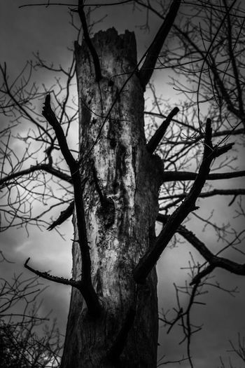 Dead Beautiful Tennessee Fiery Gizzard Trail Tree Plant Branch Bare Tree Trunk Tree Trunk Nature No People Outdoors Low Angle View Beauty In Nature