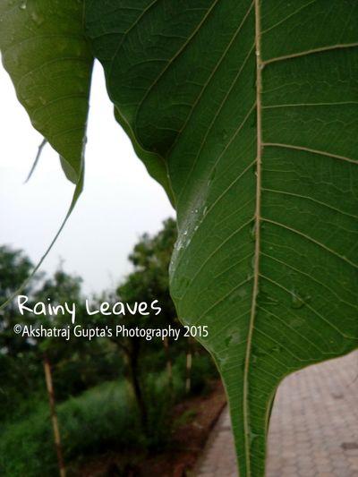 ©Akshatraj Gupta's Photography 2015 Naturelover❤ Originalsimplephoto Naturepic1 First Eyeem Photo EyeEm Best Shots Things I Like Telling Stories Differently The Great Outdoors - 2016 EyeEm Awards